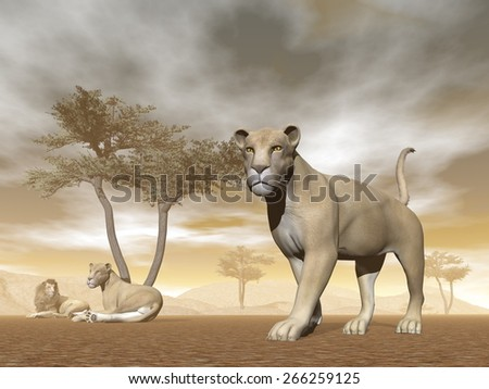 Lion herd with baby and umbrella acacias in the savannah - 3D render