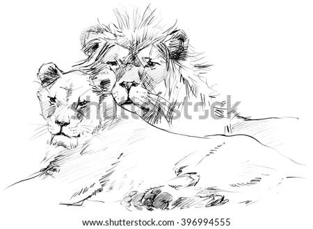 Lion. Lion pride sketch. Lion family - stock photo