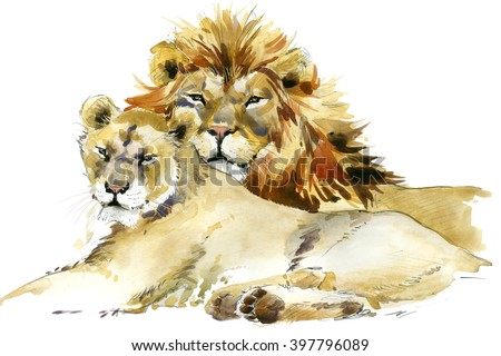Lion. Lion pride watercolor illustration. Lion family - stock photo