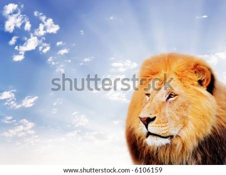lion on a sky background - stock photo