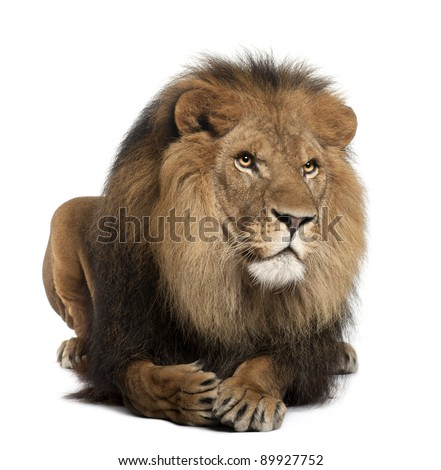 Lion, Panthera leo, 8 years old, lying in front of white background - stock photo