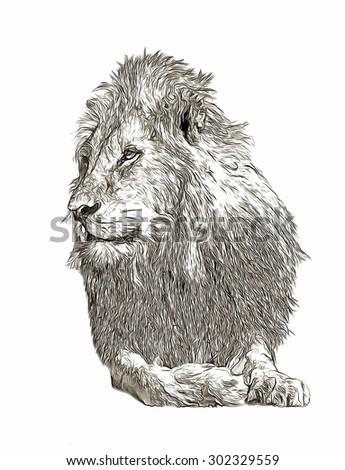 Lion pencil sketch - stock photo