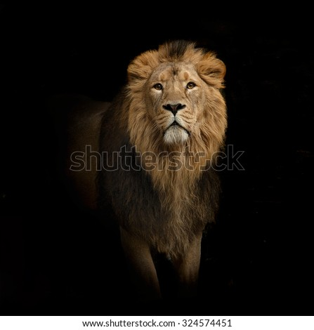 lion portrait on black - stock photo