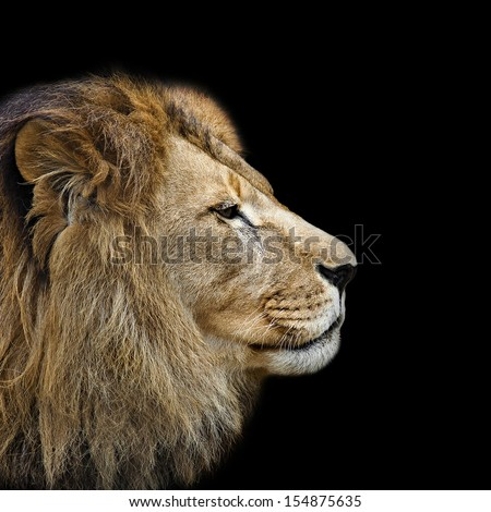 Lion's head in profile against a black background
