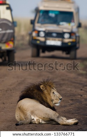 Lion with safari cars - stock photo