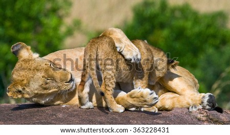 Lioness and her cub on a big rock. National Park. Kenya. Tanzania. Masai Mara. Serengeti. An excellent illustration.