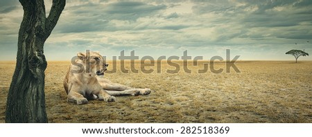 Lioness enjoying a rest in the shade of a tree on the african plains - stock photo