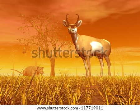 Lioness next to a tree waiting for the right moment to jump on an antelope in the nature by orange sunset - stock photo