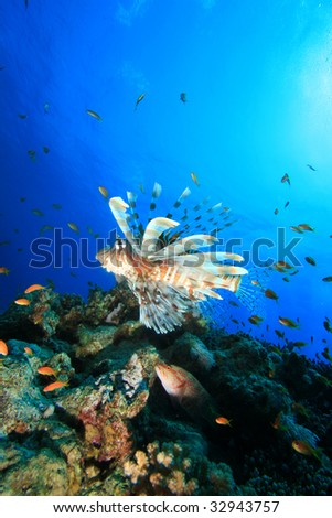 Lionfish and Coral Reef - stock photo