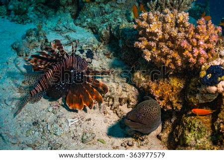 Lionfish and moray on the coral reef - stock photo