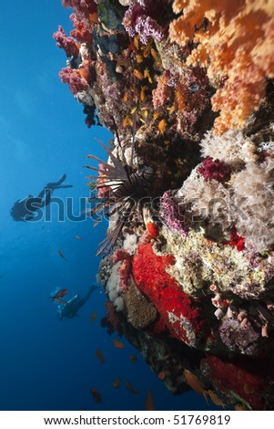 lionfish,ocean and divers taken in the Red Sea. - stock photo