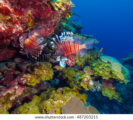 Lionfish (Pterois) near reef cave with colorful corals, Cayo Largo, Cuba