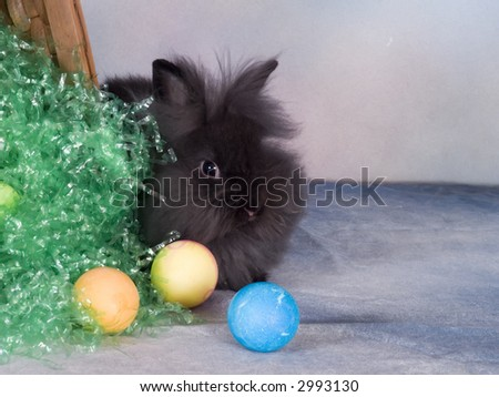 Lionhead bunny - stock photo