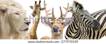 Lions, zebras, deer and giraffe - stock photo