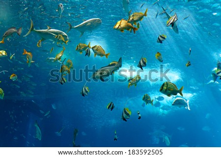 Lisbon, Portugal - March 3, 2014: Colorful tropical fishes of the Lisbon Oceanarium