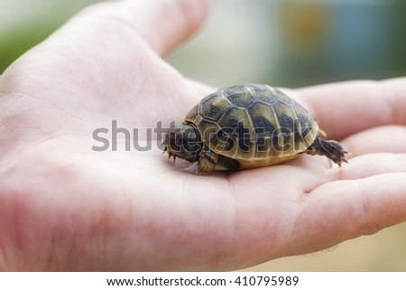 Litle turtle on hand - stock photo
