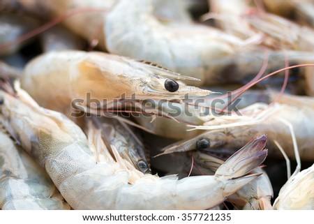 Litopenaeus vannamei, Pacific white Shrimp, White Leg shrimp - stock photo