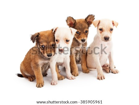 Litter of cute scruffy mixed breed dogs sitting together over white background - stock photo