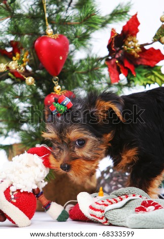 Little and cute puppies at christmas ambiance - stock photo