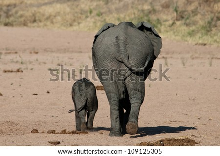 Little and Large - Elephant mother with baby, Ruaha National Park, Tanzania. - stock photo