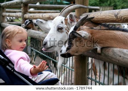 Little baby and goats. Zoo. Nuremberg. - stock photo