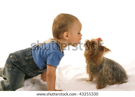 Little baby boy with yorkie - stock photo