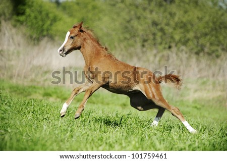 little baby foal playing on the field - stock photo