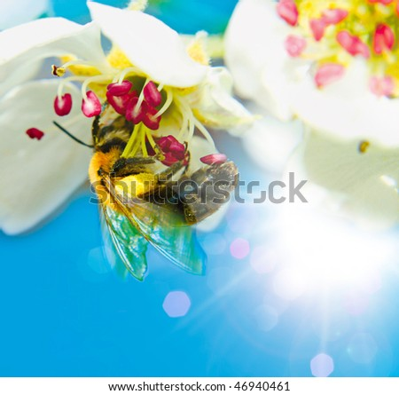 little bee collecting honey - stock photo