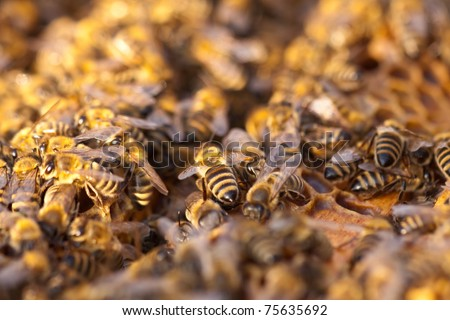 little bees in early spring time - stock photo