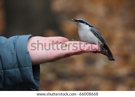 Little bird eats at a hand - stock photo