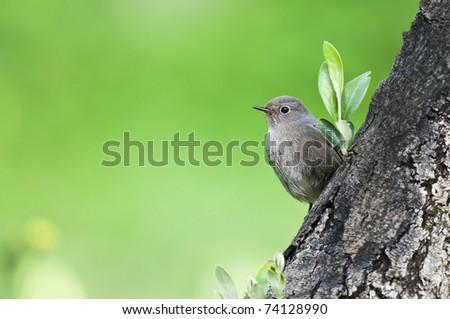 little bird on the tree - stock photo