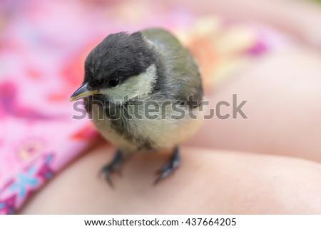 Little bird (tit) - stock photo