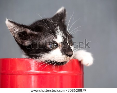 Little black and white kitten in red metal bucket with gray background, selective focus on its eye - stock photo