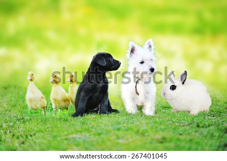 little black dog plays on green lawn - stock photo