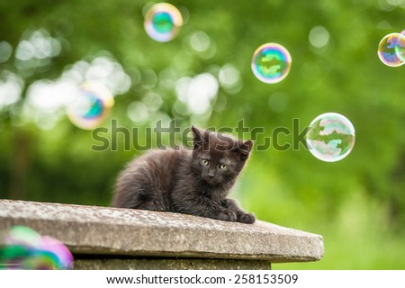 Little black kitten and soap bubbles - stock photo