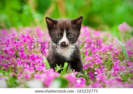 Little black kitten sitting in flowers - stock photo