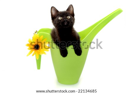 Little black kitting popping out of a green watering can isolated over a white background
