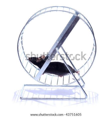little black mouse running on an exercise wheel  on white background