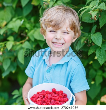 Little blond kid boy having fun with picking berries on raspberry farm on hot summer day, outdoors. Healthy snack for children in summer. Boy holding bucket with berries. - stock photo