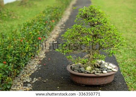 little bonsai in the garden