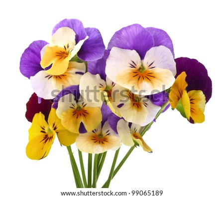 little bouquet of pansy flowers - stock photo