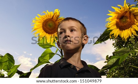 Little boy against on a blooming sunflowers  - stock photo
