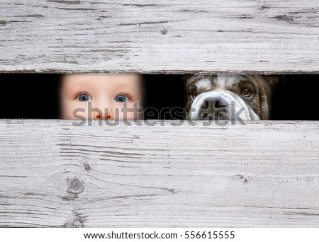 little boy and the dog looking between the gap of the boards