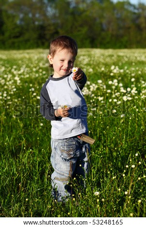 little boy collects daisies