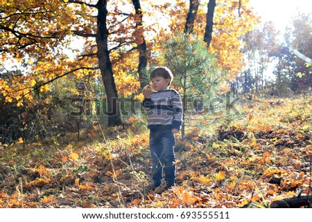 Little boy eating an apple in the forest with autumn colors. Child eating an apple