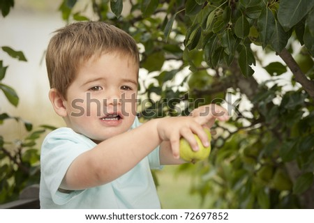 little boy excited about picking pear from a tree - stock photo