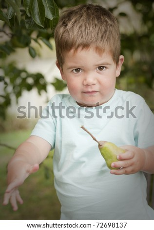 little boy excited about picking pear from tree - stock photo