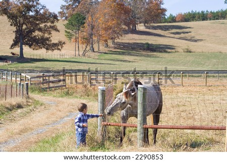 Little boy feeding horse  at farm, tennessee - stock photo