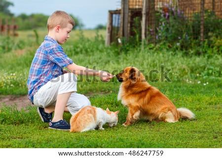 Child Feeding Dog Stock Photos Royalty Free Images