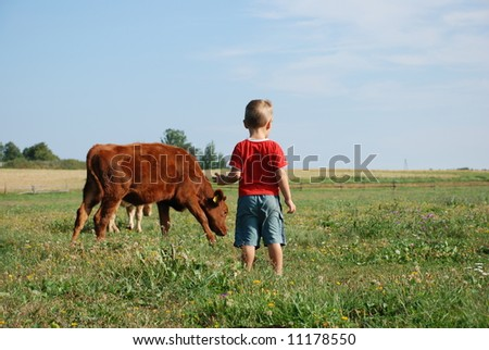 Little boy going to calf - stock photo